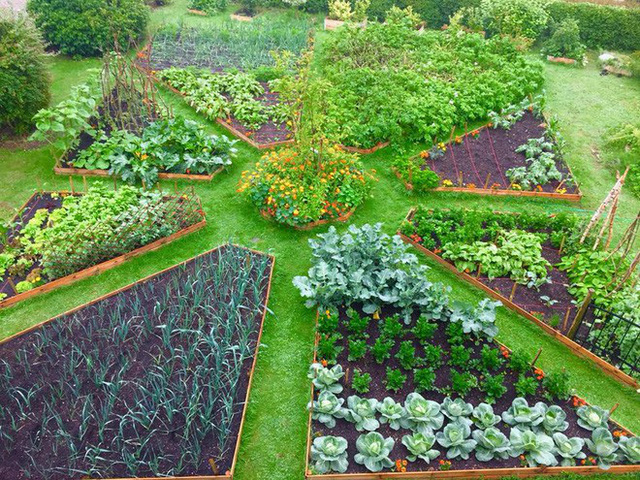 Diện tích rộng đủ để trồng đủ các loại rau quả