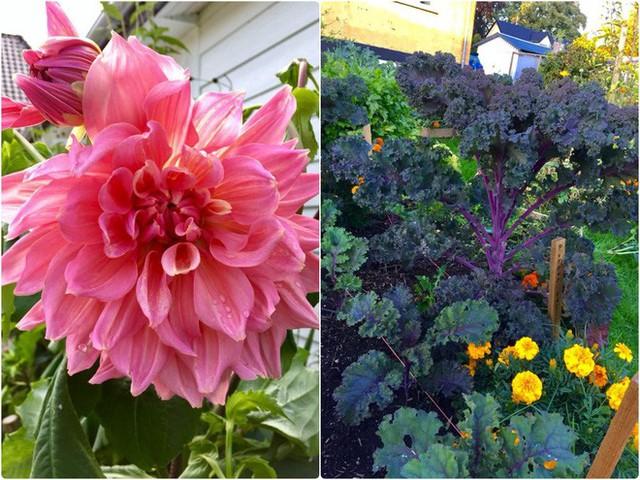 Rau và hoa trong vườn