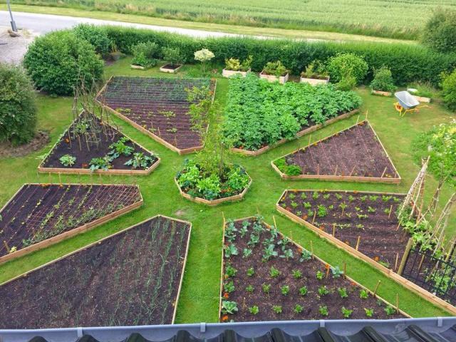 Ươm trồng các loại rau
