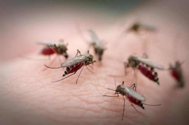 Muỗi là sinh vật đáng ghét nhất mùa hè.