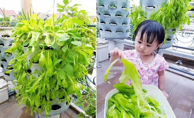 Trên sân thượng, Di Băng và chồng tranh thủ trồng thêm rau xanh dạng tháp - tiết kiệm diện tích, để gia đình có thêm rau sạch.
