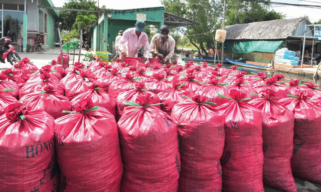 Trung bình mỗi ngày Cà Mau xuất đi 20 tấn hến cho thị trường miền Trung.