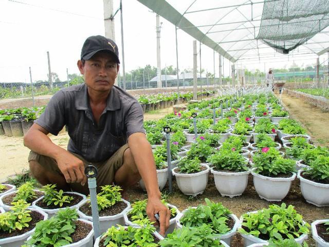 Vườn hoa của anh Quốc ở thôn Dương Sơn, xã Hòa Châu, huyện Hòa Vang, Đà Nẵng. Ảnh: Hoa Nhi