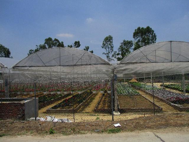 Hệ thống nhà kính khép kín giúp vườn hoa của anh Quốc ít sâu bệnh, phát triển tốt hơn so với trồng bên ngoài. Ảnh: Hoa Nhi