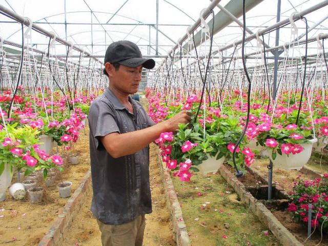 Vườn hoa treo dạ yến thảo giúp anh Trần Dũng Quốc lãi trên 300 triệu đồng/năm. Ảnh: Hoa Nhi