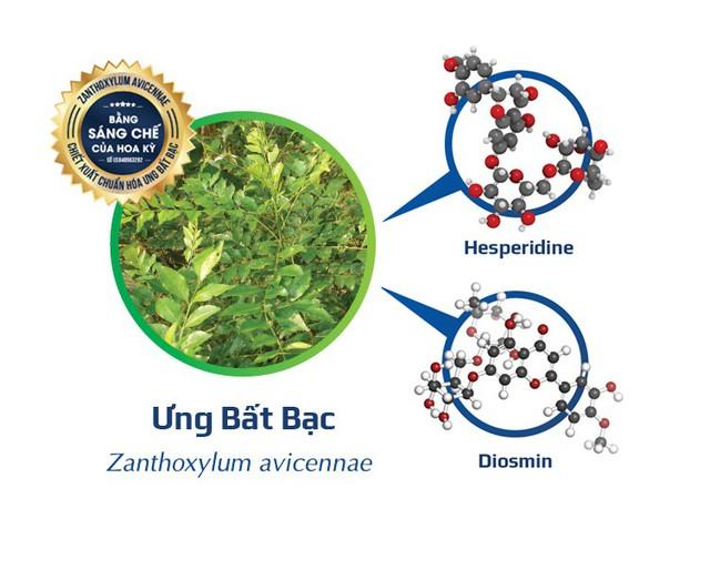 Ưng Bất Bạc chứa một sồ flavonoid quý như Hesperidine và Diosmin