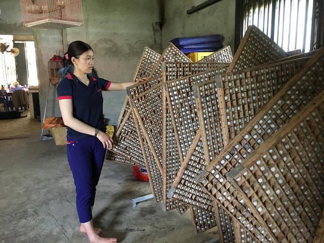 Sau khi tằm chín đều, né gỗ đã được chị Linh chuẩn bị sắn để tiện lợi cho tằm nhả tơ