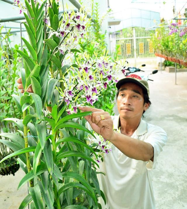 Với sự khéo léo của mình anh Khanh rất thuận lợi tyrong việc tạo dáng lan. (Ảnh: NQ).