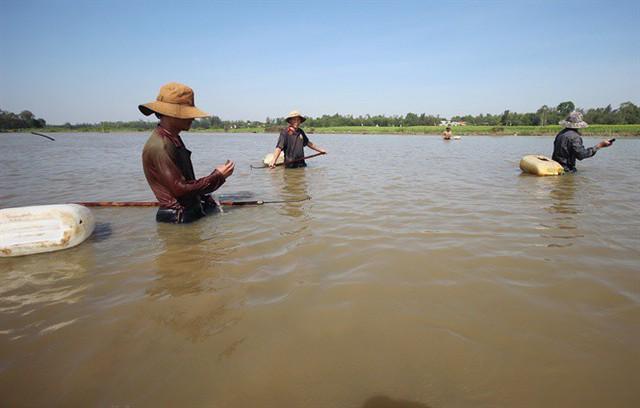Nhóm thợ dàn thành hàng ngang bắt lươn trên sông Đầm, TP Tam Kỳ