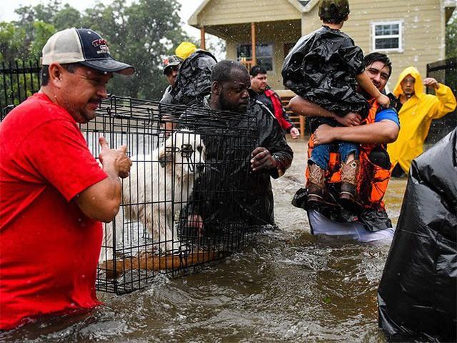 Tình nguyện viên xung phong giúp đỡ mọi người và động vật trong trận lũ ở Houston, Mỹ.