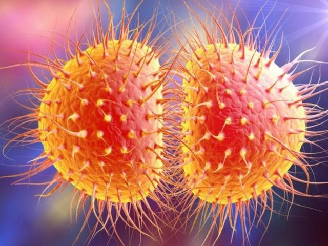 Hình ảnh vi khuẩn gây bệnh lậu.
