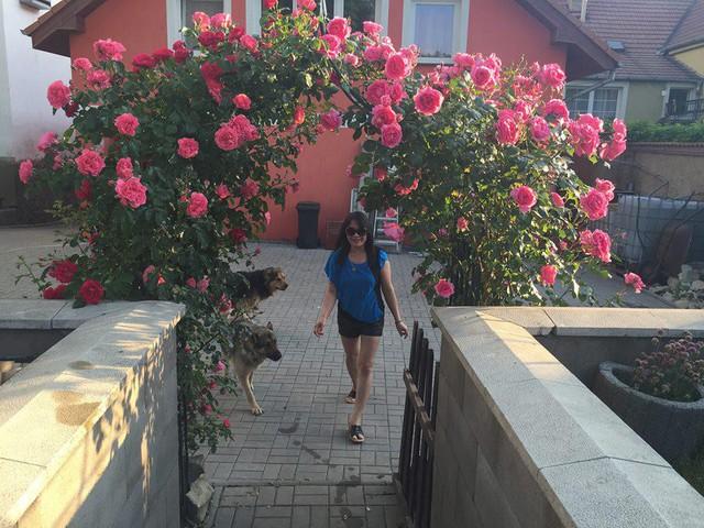 Khu vườn ngập tràn hoa hồng là nơi chị thư giãn sau những thời gian làm việc căng thẳng. Hương thơm và sắc màu quyến rũ của hoa hồng cũng giúp cho chị thêm yêu đời hơn.