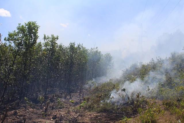 Vụ cháy rừng ở Quỳnh Lưu khiến ông Luyện tử vong. Ảnh: Nam An.