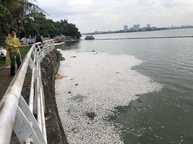 Hiện tượng cá chết nổi trắng Hồ Tây bắt đầu diễn ra vào khoảng tối ngày 8/7, đến sáng ngày 9/7 thì lượng cá chết trôi dạt vào khu vực đường Trích Sài tăng lên. Ảnh: PV