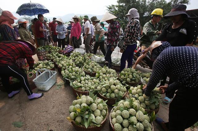 Na trồng theo tiêu chuẩn VietGap, GlobalGap được chọn lọc và thu mua với giá cao. Na dai quả to từ 800 gram hay na bở trên 500 gram giá cũng tốt hơn hẳn.