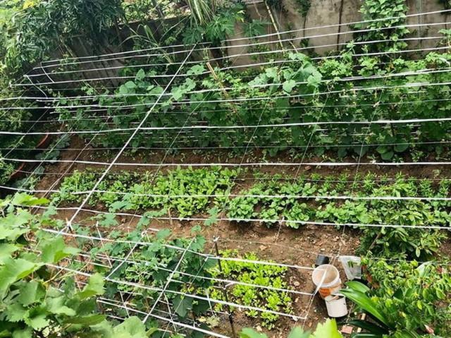 Nhìn từ trên cao xuống là cả một khu vườn rợp màu xanh