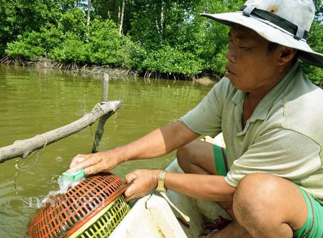 Đặc tính loài tôm tích là phải ăn các loài cá đã bị ương, nên bà con nuôi cần lưu ý. Những chiếc lồng sẽ được vệ sinh thường xuyên để loại bỏ rong rêu, giúp tôm tích phát triển tốt hơn. (Ảnh: Chúc Ly).
