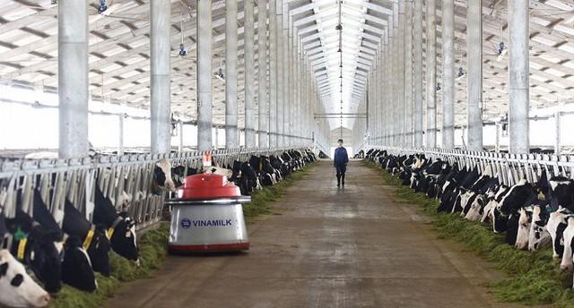 Trang trại Thanh Hóa – trang trại vừa khánh thành vào tháng 3/2018 sẽ là nơi chăm sóc và nuôi dưỡng những cô bò A2 thuần chủng.