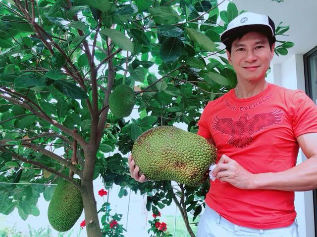 Mít Thái trồng trên ban công của gia đình Lý Hải nay đã được thu hoạch trái đầu tiên khá lớn.