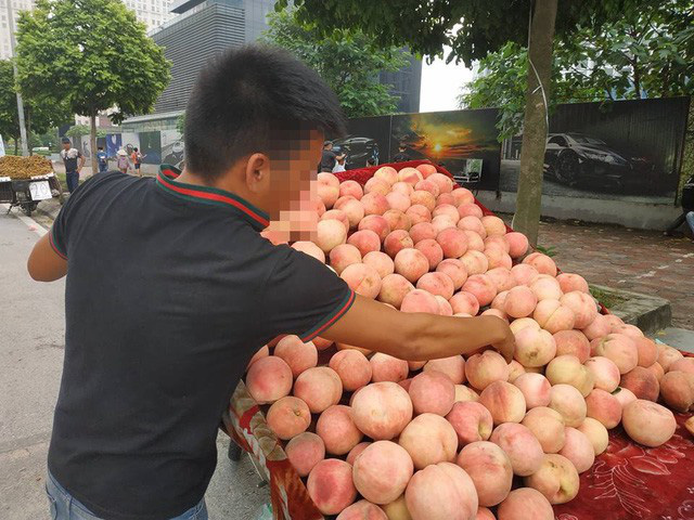 Các thương lái đều khẳng định đây là đào Tiên có xuất xứ từ tỉnh Lào Cai