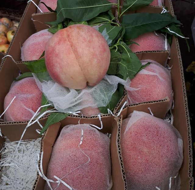 Trên các khu chợ mạng, đào Tiên khổng lồ cũng được rao bán rầm rộ