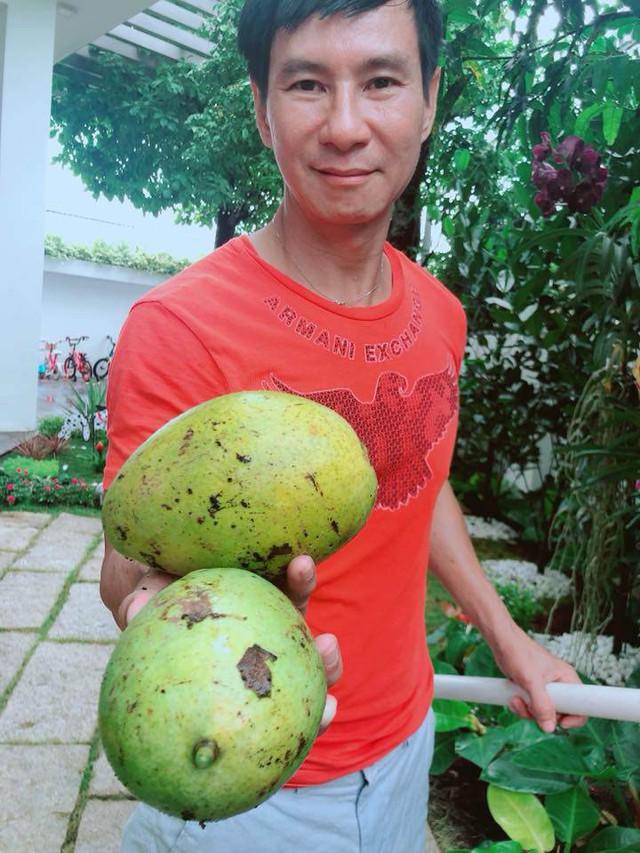 Chưa có dụng cụ đỡ xoài nên Minh Hà lấy cây chọc rụng và mùa sau sẽ nhớ đầu tư cái rọ hái cho chuyên nghiệp.