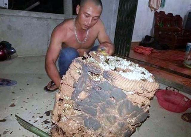 Chiến tích của một thợ săn ong chần tại Thanh Thủy