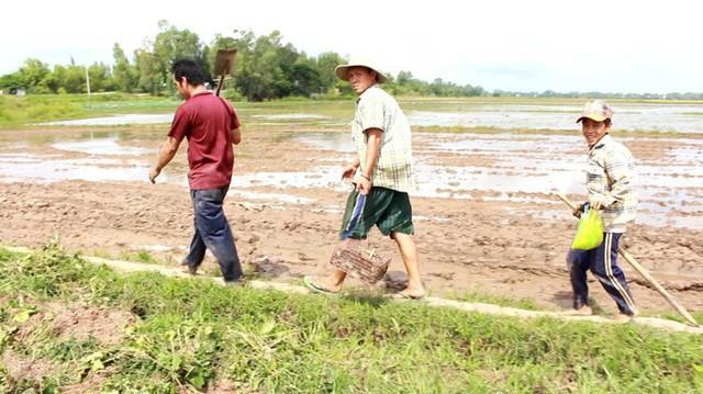 Lúa trên những cánh đồng thu hoạch xong sẽ báo hiệu mùa săn chuột đồng bắt đầu nhộn nhịp hẳn lên