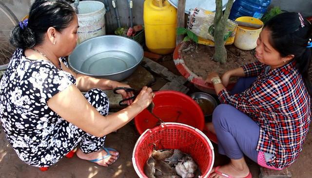 Thời điểm mùa nước lũ thì thịt chuột đồng ăn thơm ngon, béo ngậy