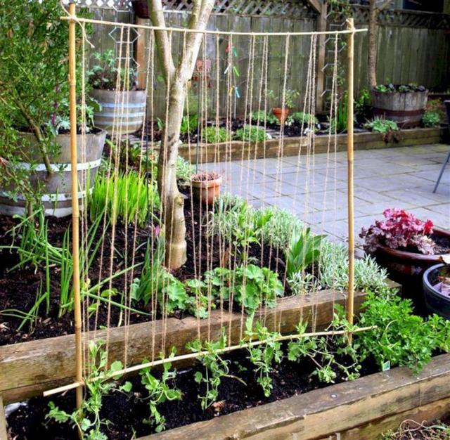 Giá cây leo có rất nhiều hình dạng, bạn có thể tùy hứng sáng tạo thổi hồn thêm cho khu vườn. Kiểu hình chiếc thang cũng khá phổ biến và dễ làm, bạn chỉ cần gỗ thanh, đinh vít và khoan là đủ rồi.