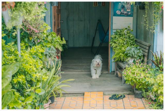 Không chỉ trông cây, chủ nhân của ngôi nhà còn nuôi cá và một chú chó nhỏ.