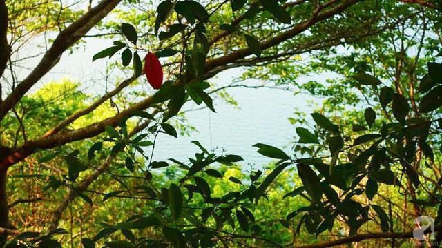 Khung cảnh yên bình của rừng cây, biển cả từ tầm nhìn của ngôi nhà.