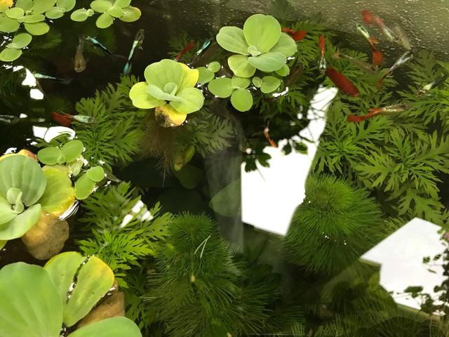Bể cá tuy nhỏ mà có võ, vô cùng đẹp và sinh động.