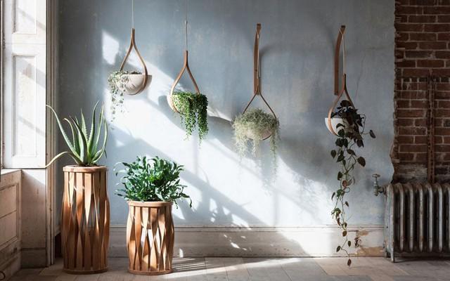 Không còn là những chậu cây nhựa đơn điệu, nhàm chán nữa, giờ đây các gia đình đều lựa chọn cho mình những mẫu chậu trồng cây vừa ấn tượng, lại đẹp mắt.