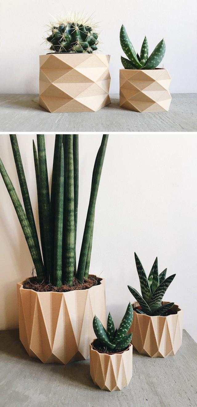 Không chỉ dùng để trang trí cho không gian sống gia đình thêm sức sống, bạn còn có thể lựa chọn những chậu cây ấn tượng làm món quà nhỏ tặng bạn bè và người thân.