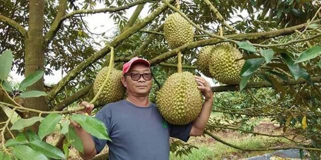 Ông Chainok - chủ vườn sầu riêng Monthong rộng lớn ở tỉnh Tak, Thái Lan. Ảnh: Facebook.