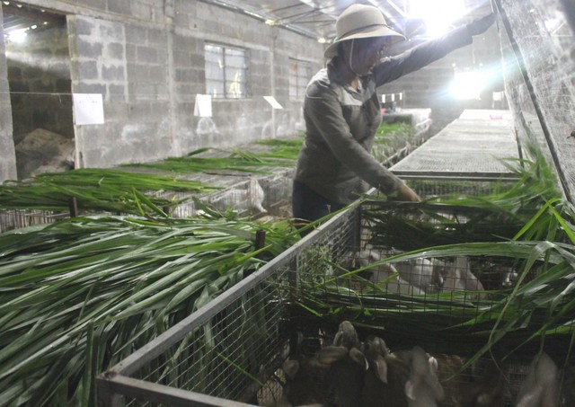 Chị Nguyễn Thị Sương tại trang trại thỏ của gia đình.
