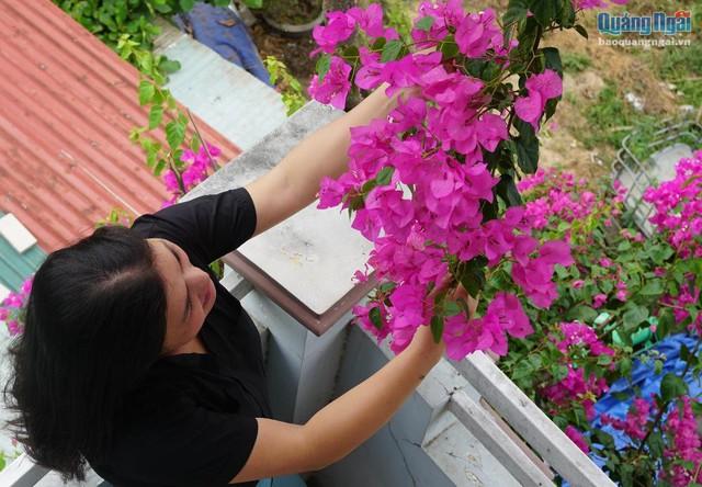 Hoa giấy không có mùi hương, không rực rỡ, không kiêu sa như nhiều loài hoa khác. Nhưng vẻ đẹp mong manh của hoa giấy khiến con người có cảm giác bình yên, nhẹ nhõm đến lạ.