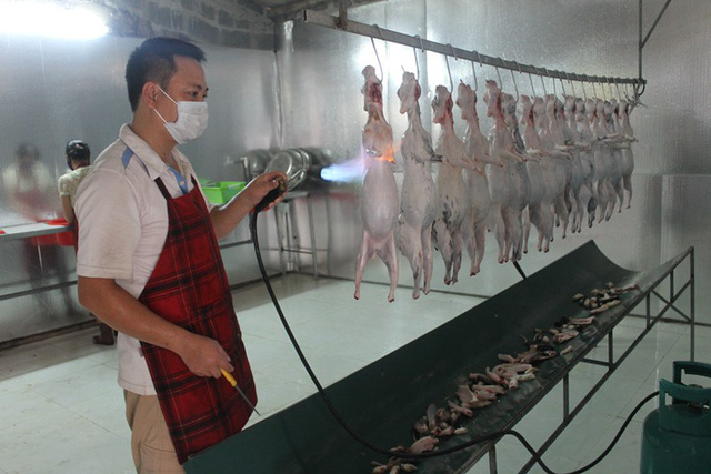 Dây chuyền chế biến thịt thỏ của gia đình anh Nam trước khi đưa ra thị trường.