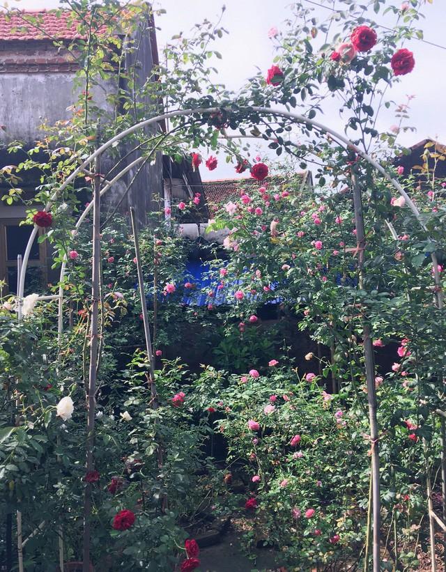 Nhiều loại hoa được anh bắc giàn cho cây leo lên khá đẹp mắt
