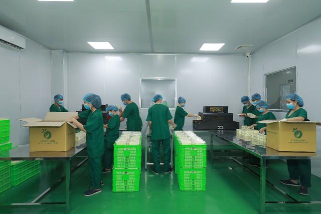 Cường Anh đang gia tốc sản xuất cho những lô hàng phục vụ nhu cầu cuối năm