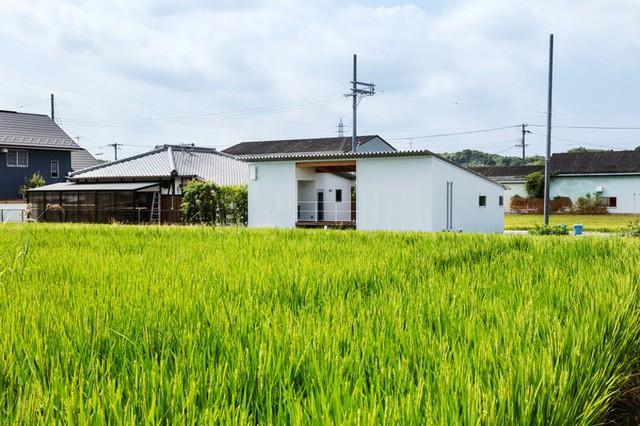 Ngôi nhà rất gần gũi với thiên nhiên. Phía trước nhà là cánh đồng lúa, bên hông nhà là khoảnh nhỏ trồng cây lấy gỗ.