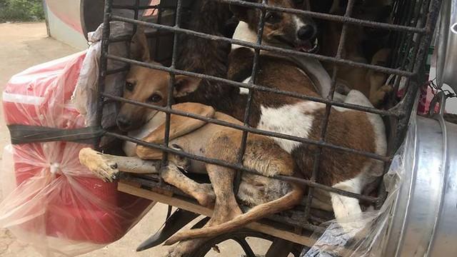 Việt Nam là một trong những nước ăn thịt chó nhiều nhất thế giới với 5 triệu con chó bị làm thịt và tiêu thụ mỗi năm.