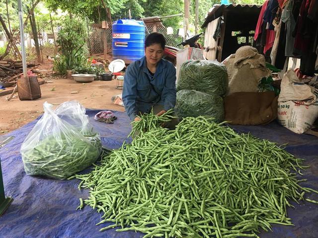 Chị Dâng đóng gói đậu cô ve để bán đổ cho các thương lái ngoài huyện Mộc Châu, (Sơn La)