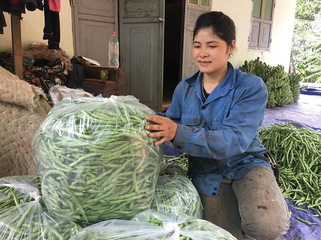 Từ khi chuyển sang trồng đậu cô ve, thu nhập kinh tế của gia đình chị Dâng đã khá giả hơn so với trước.