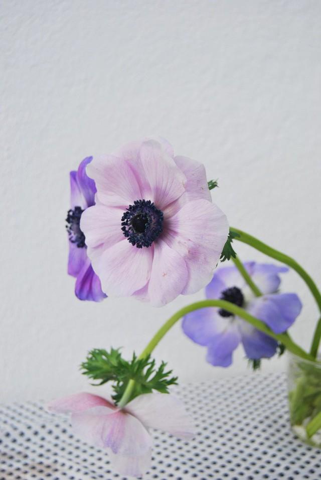 Để cắm một bình hoa đẹp, cần chọn các loài hoa có độ tươi tắn và rực rỡ.
