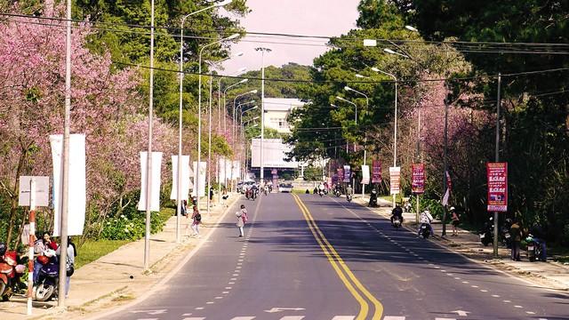 Sắc hồng nhuộm kín hai bên đường Trần Hưng Đạo.