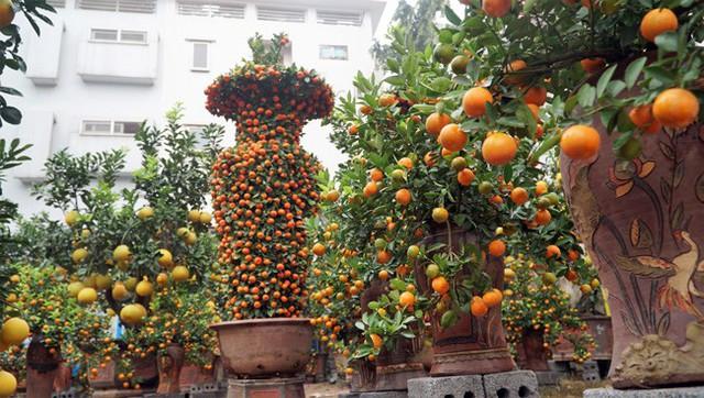 Anh Nguyễn Kim Thắng (Hoài Đức, Hà Nội) đã trưng cặp quýt lộc bình khủng của nhà vườn mình trên phố từ đầu tháng 11 Âm lịch để khách tham quan và định giá.