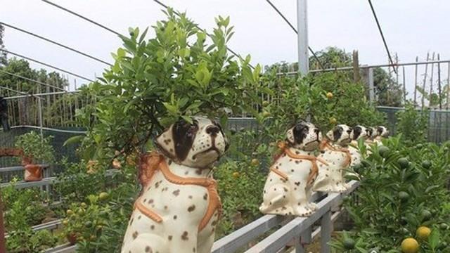 Để phục vụ thị hiếu chơi quất dịp tết Mậu Tuất của người dân, một chủ vườn cây cảnh ở Bắc Từ Liêm (Hà Nội) đã tạo ra những cây quất cảnh bonsai trồng trong chậu sành hình chú chó vô cùng ngộ nghĩnh