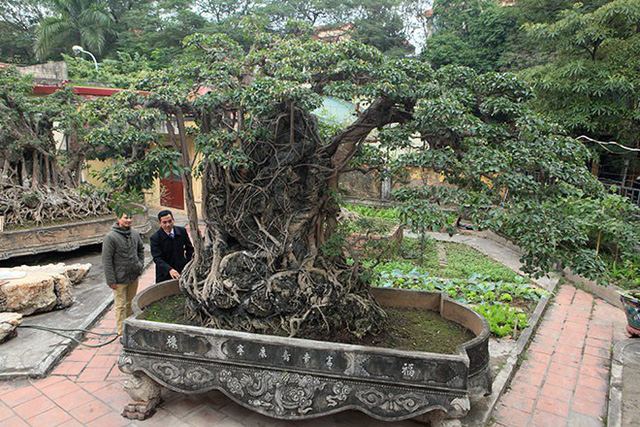 Tác phẩm sanh Mộc thạch nghênh phong hiện thuộc sở hữu của một giám đốc công ty ở Hoàng Mai (Hà Nội).